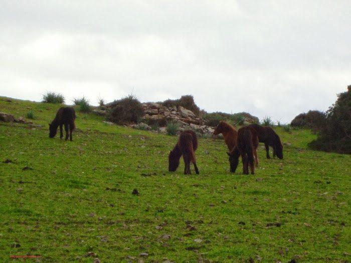 La pradera rodeada caballos
