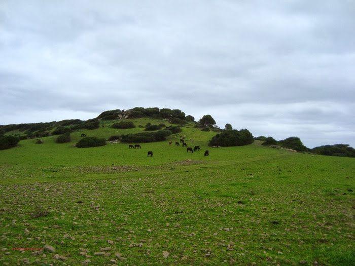Las praderas de Menorca
