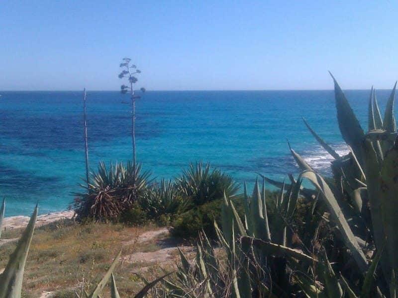 Vegetación en la costa